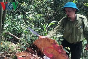 Khẩn trương điều tra vụ phá rừng tại huyện Ngân Sơn, Bắc Kạn