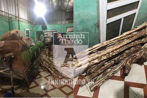 Cây gỗ sưa trong trường học 'bốc hơi' sau một đêm mưa bão
