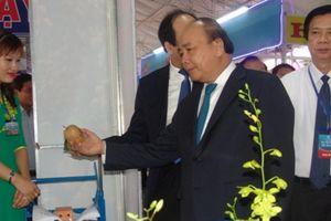 16.000 tỷ đầu tư vào 31 dự án nông nghiệp và chế biến nông sản của Tiền Giang