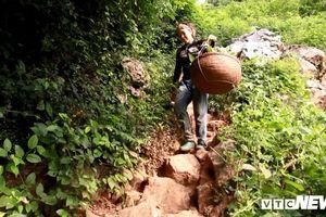Nông dân Lạng Sơn gánh na xuống núi từ vách đá cheo leo