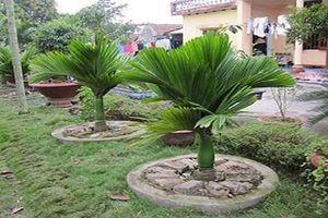 Một số loại cây phong thủy phổ biến nên trồng cho không gian sống quanh bạn