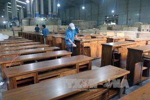Hướng đến xây dựng nguồn nguyên liệu gỗ bền vững