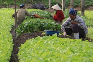 Khó khăn trong đầu tư sản xuất nông sản an toàn