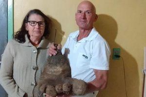 Kỳ dị khoai tây 8kg giống bàn chân người