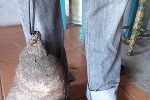 Lạ lùng củ khoai tây 8 kg, y hệt bàn chân người khổng lồ