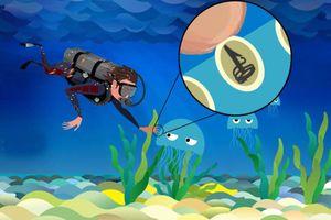 Làm gì khi bị sứa cắn?