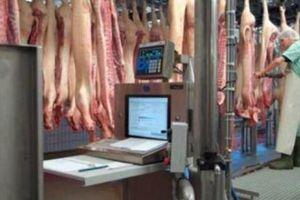 Tiêu chuẩn thịt mát: Giấy thông hành cho miếng thịt sạch đến bàn ăn