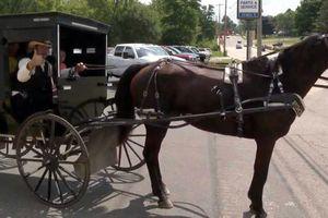 Uber… ngựa