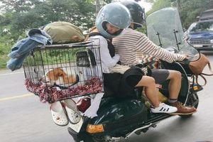 Chàng trai Sài Gòn cùng chó cưng đi phượt khắp muôn nơi