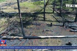 Tàn phá, lấn chiếm hơn 4.000 héc ta rừng tại Đắk Nông
