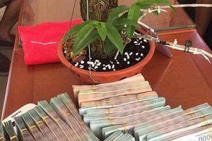 Giò phong lan cực hiếm được dân chơi Hải Phòng 'ăn chực nằm chờ' quyết tâm mua với giá 700 triệu
