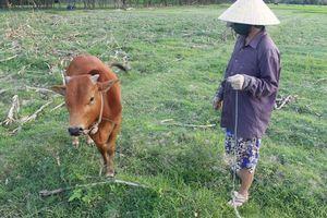 Tiếp bài 'Quảng Ninh- Quảng Bình: Trâu, bò muốn ăn cỏ ngoài đồng phải đóng phí': Yêu cầu chấm dứt các khoản thu không hợp lý