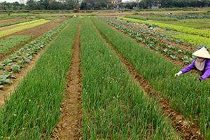 Chưa có sổ đỏ người dân vẫn được bồi thường về đất nông nghiệp