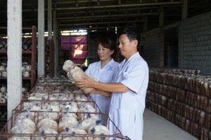 Quảng Bình xây dựng 3 mô hình nông nghiệp công nghệ cao