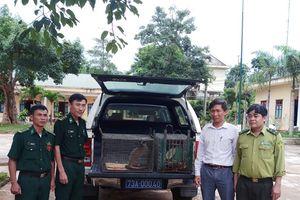 Tiếp nhận 6 cá thể động vật hoang dã bị bẫy bắt trái phép để cứu hộ