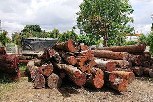 Vụ trùm gỗ lậu Phượng 'râu': Bắt một lãnh đạo Hạt kiểm lâm