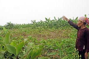 Hà Nội: Xây dựng dự án nông nghiệp hữu cơ công nghệ cao trên không gian thoát lũ