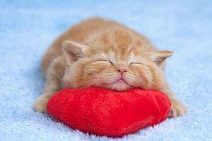 Chùm ảnh: Tan chảy trước loạt ảnh siêu đáng yêu của những bé mèo