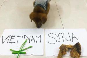 Clip: Xem chó 'tiên tri' kết quả Olympic Việt Nam vs Olympic Syria