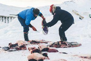 Rợn người cảnh xẻ da lóc thịt hải cẩu