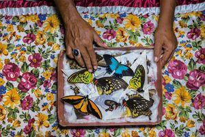 Khám phá ít biết về người săn bướm bí ẩn ở Indonesia