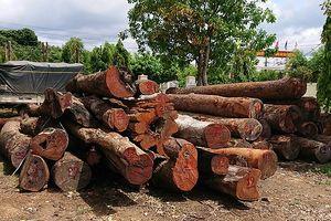 Tin mới vụ trùm gỗ Phượng 'râu': Khởi tố 2 lãnh đạo Hạt kiểm lâm