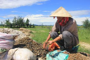 PCT tỉnh Hà Tĩnh chỉ đạo làm rõ vụ người dân nuôi ốc bị côn đồ 'làm luật'