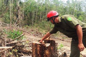 Ea Kar (Đắk Lắk): Bắt giữ 02 xe gỗ nghi khai thác từ rừng phòng hộ