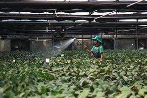 Phát triển nông nghiệp 4.0: Giải bài toán về vốn, nguồn nhân lực