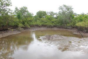 Chủ tịch huyện bị phê bình do quản lý đất đai lỏng lẻo