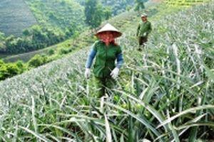 Lào Cai chuyển dịch cơ cấu kinh tế nông thôn