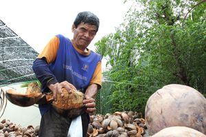 Người đàn ông mù mưu sinh bằng nghề lột dừa