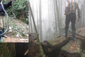 Hết sức rùng rợn: Liều mạng vào rừng sâu để vồ… 'thần chết'