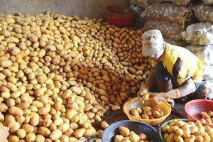 Chợ Đà Lạt cấm cửa khoai tây, cà rốt Trung Quốc