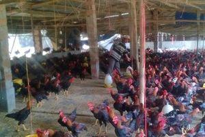 HLV Phước Hưng: 'Nông dân dạy nông dân, nông dân học nông dân'