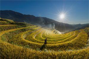 Sắc thu rực rỡ trong mùa vàng Mù Cang Chải