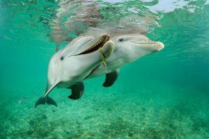 Tìm thấy hóa chất từ nhựa và mỹ phẩm trong cá heo hoang dã