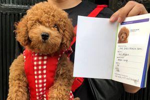 9X 'dở khóc dở cười' khi lần đầu đưa chó đi làm giấy khai sinh