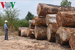 Vụ vận chuyển gần 85m3 gỗ ở Kon Tum: Sở Nông nghiệp kiến nghị