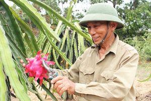 Những nông dân thời 4.0 ở Hà Tĩnh