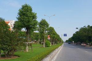 Hơn nghìn cây long não trồng ở đường hoa đẹp nhất Hải Phòng, bây giờ ra sao?