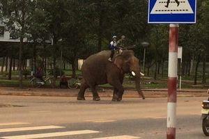 Lạ lẫm hình ảnh voi đưa học sinh đến trường tại Đắk Lắk