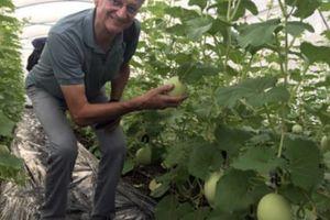 An Giang 'hút hàng' đầu tư nông nghiệp công nghệ cao
