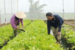 Nông dân Khmer thoát nghèo nhờ trồng rau sạch
