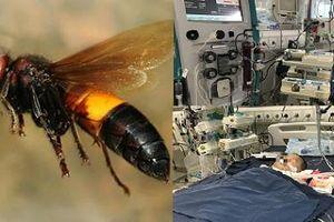 Có thể tử vong nếu tự xử lý vết ong đốt sai cách tại nhà