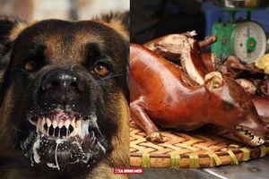 Ăn thịt chó dại có bị dại không?