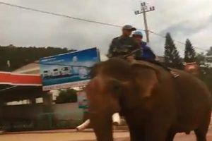 Thích thú với hình ảnh học sinh Đắk Lắk cưỡi voi về nhà sau giờ tan trường