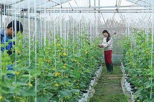 Tăng mức cho vay hộ nông dân khi không có tài sản bảo đảm