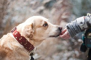 Nói không với thịt chó: Không phải vô lý