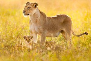 Bài học yêu thương từ muôn loài
